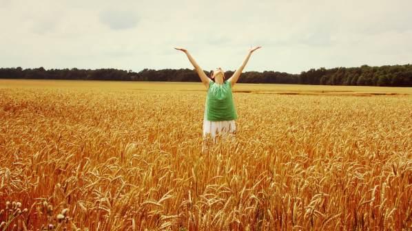 Hutts wheat field